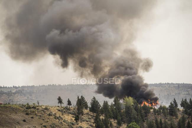 Fumée d'un incendie de forêt remplit l'air dans l'Oregon, é.-u. — Photo de stock