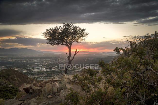 Einzigen Baum im Vordergrund während des Sonnenuntergangs über Salt Lake City, Utah, Usa — Stockfoto