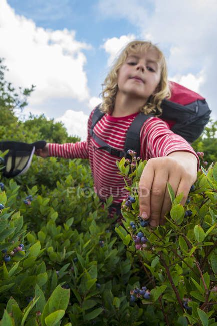 Young Girl Picking Blueberries On Mountain Trail — стокове фото
