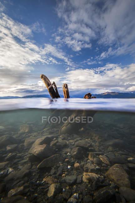 View Of Driftwood Underwater In Lake Kluane — Stock Photo
