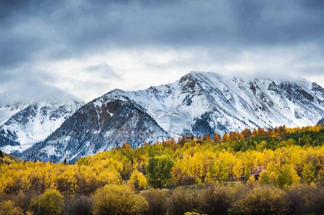 Belles montagnes enneigées et forêt jaune sous le ciel nuageux — Photo de stock