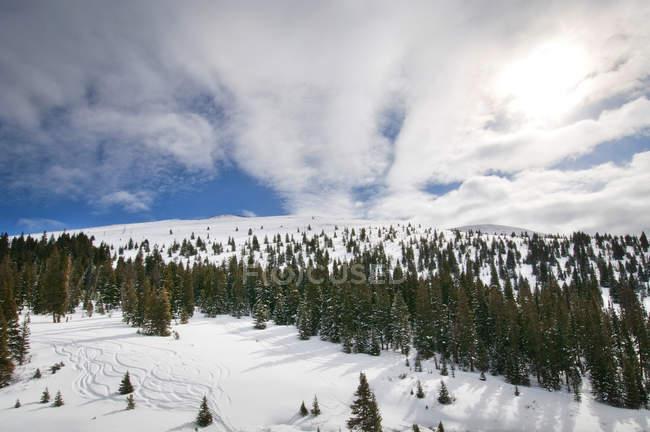 Paysage d'hiver avec des pistes de Ski dans l'arrière-pays, Vail, Colorado — Photo de stock