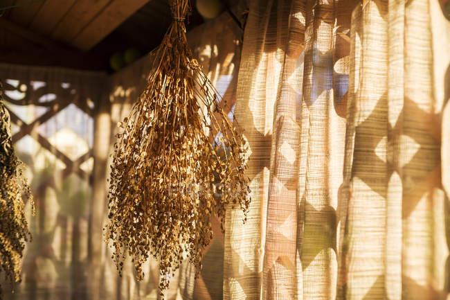 Hierbas vegetales secado en balcón. - foto de stock