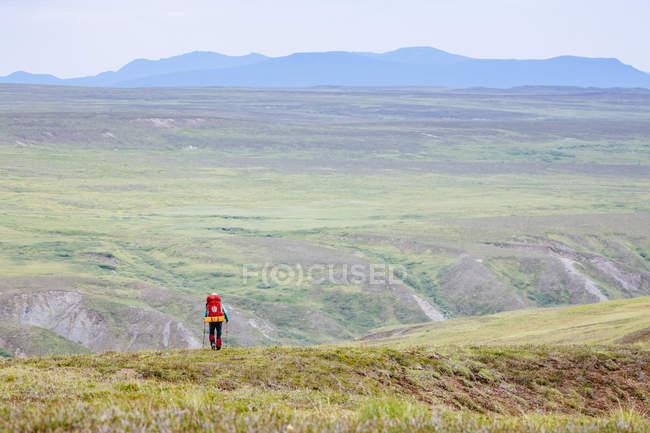 A Woman Is Hiking In The Delta Mountains, Alaska Range, Alaska, Usa — Stock Photo