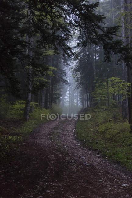 Chemin serpentant à travers les arbres de pin à l'automne — Photo de stock