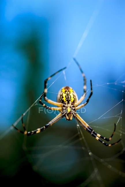 Close-up de uma aranha de jardim em sua teia — Fotografia de Stock