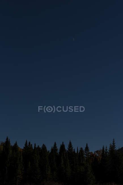 Силуэт елей и Восход луны в белых горах Нью-Гэмпшира — стоковое фото
