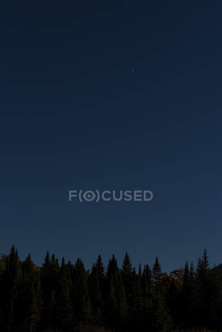 Silhouette Of Spruce Trees And Moonrise In The White Mountains Of New Hampshire — Stock Photo
