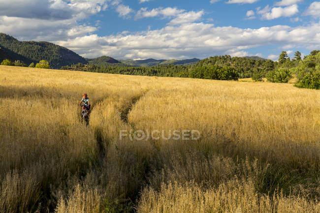 Young girl riding on mountain bike through field - foto de stock