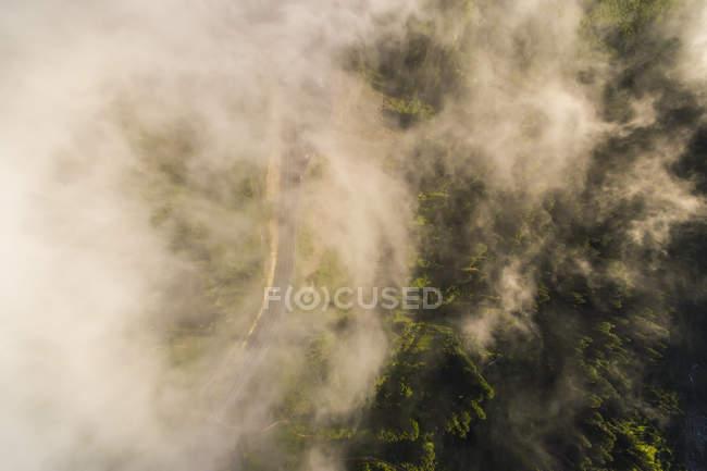 Nubes tenues obscurecen un bosque visto desde arriba - foto de stock