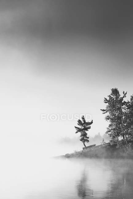 Trees On Coast Of Lake Nipissing In Early Morning With Fog Rising Up — Stock Photo