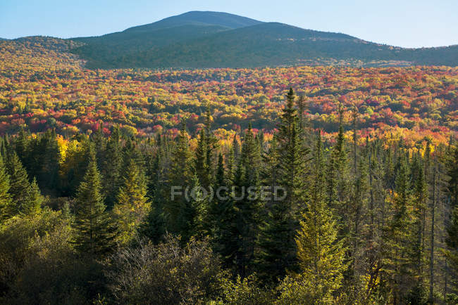 Fall Foliage And Spruce Trees In The White Mountains Of New Hampshire — Stock Photo