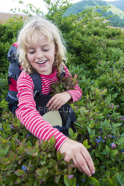 Smiling Girl Picking Blueberries On Mountain Trail - foto de stock