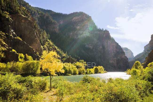 Scenic view of trees and Colorado River — Stock Photo