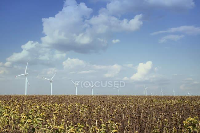 Windkraftanlagen im Sonnenblumenfeld — Stockfoto
