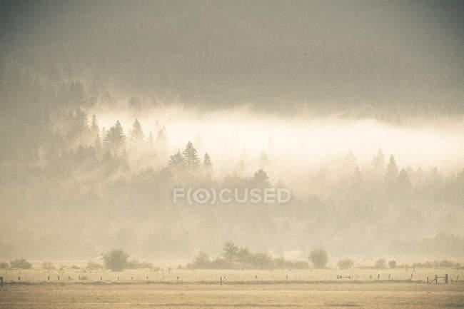 La brume au-dessus des arbres en début de matinée — Photo de stock