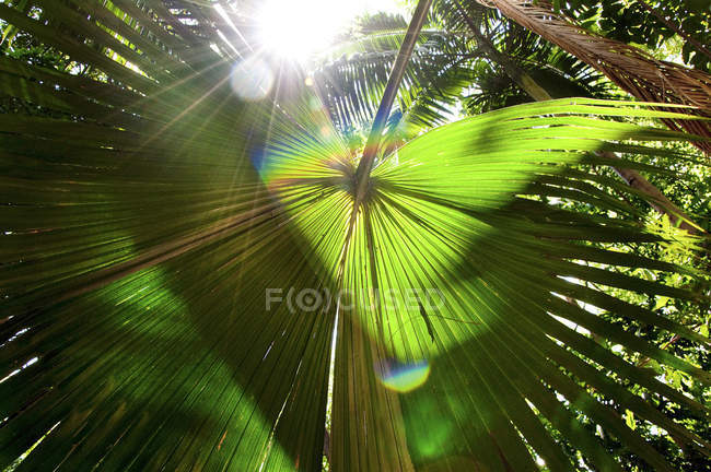Sunlight Shines Through Thick Tropical Canopy With A Palm Frond — Stock Photo