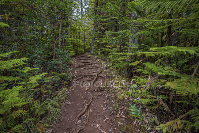 Forest view on the Okolehao Trail in Hawaii — Stock Photo