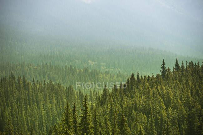 Alberta deserto perto de Banff — Fotografia de Stock