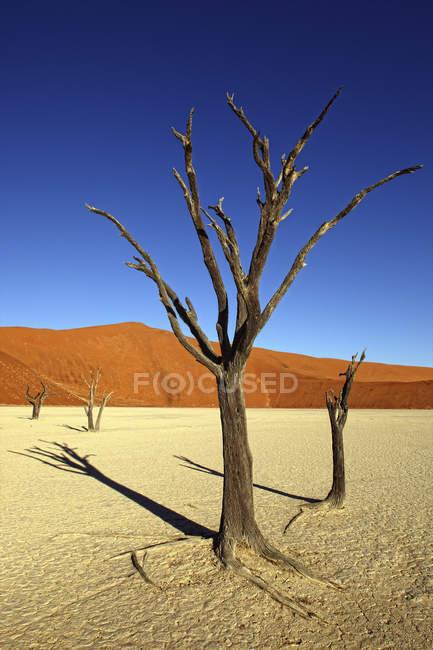 Vista do morto árvores, Deadvlei, deserto do Namibe, Namíbia — Fotografia de Stock