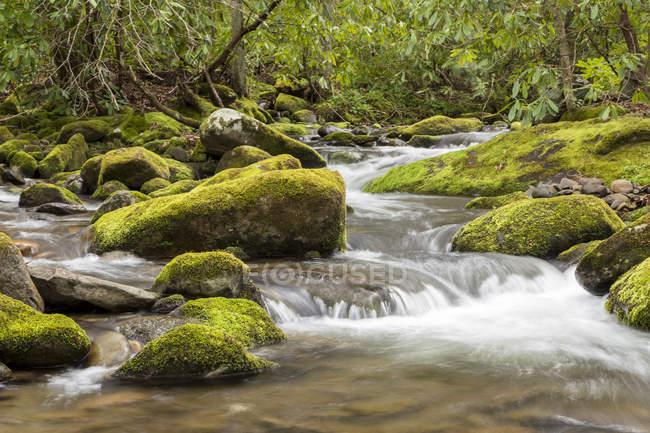 Пороги и поток в районе Roarking вилка в Великой Смоки горы Национальный парк — стоковое фото