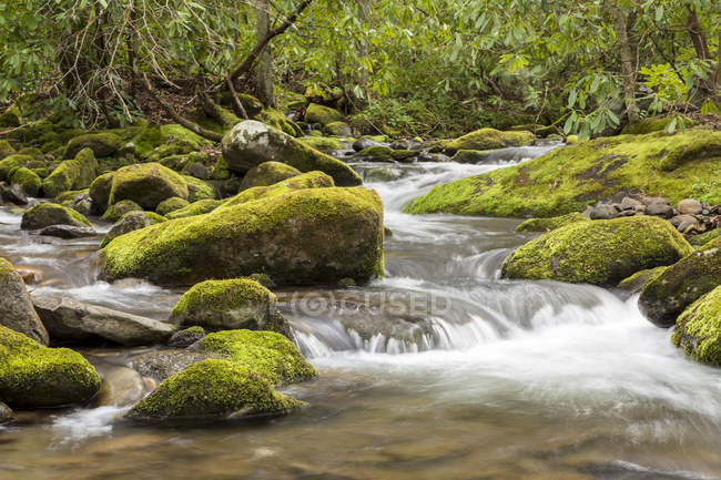 Rapids and stream in the Roarking Fork area of the Great Smoky Mountains National Park. — стоковое фото