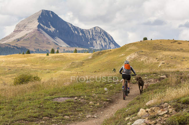 A Woman and her dog mountain  biking the Molas Pass section of the Colorado Trail with Engineer Mountain in the background, San Juan National Forest, Silverton, Colorado. — Stock Photo
