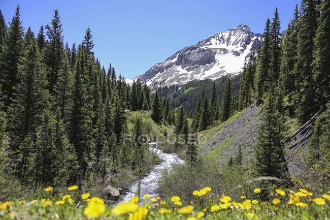 Colorado Mountain Creek fließt nach unten In den San Juan National Forest — Stockfoto