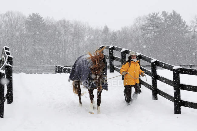 Woman Carrying Horse In Snowy Landscape — Stock Photo