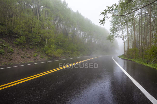 Guardsman Pass Road In Big Cottonwood Canyon Shimmers With Light Shortly After Downpour — Stock Photo