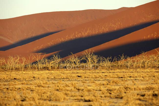 Песчаные дюны в Sossusvlei, Парк Namib-Naukluft, пустыня Намиб, Намибии, Африка — стоковое фото