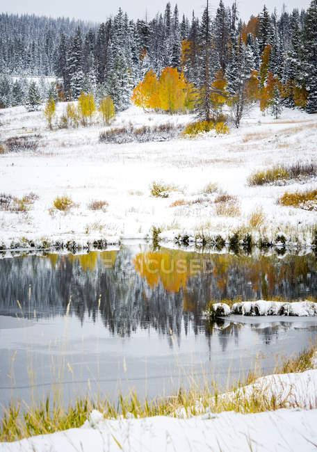 Начале сезона снег на Золотой Аспен деревья вдоль кроличьи уши пройти за пределами Стимбот Спрингс, Колорадо — стоковое фото