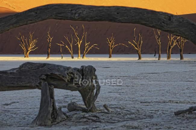 Мертві дерева, Deadvlei, Sossusvlei, Namib Naukluft парк, Наміб, Намібія, Африка — стокове фото