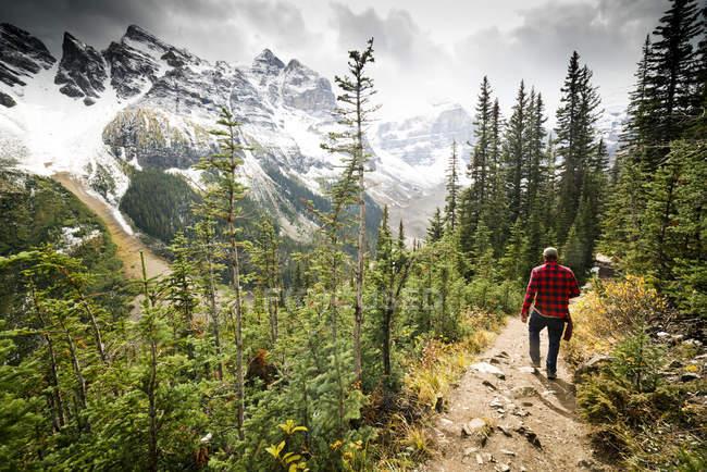 Ein wanderer, der durch den wald im banff nationalpark wandert, kanada mit schneebedeckten bergen im hintergrund. — Stockfoto