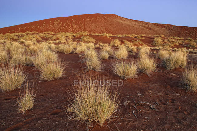 Sand dune, Sossusvlei, Namib Naukluft Park, Namib Desert, Namibia, Africa — Stock Photo