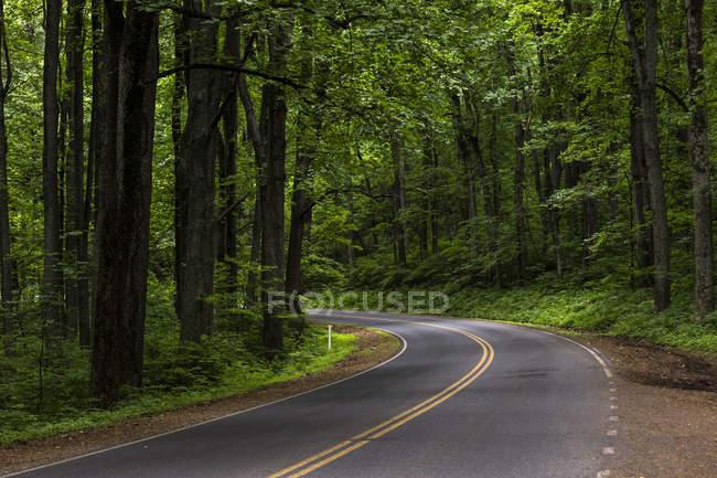 Skyline Drive circondato da una verde foresta avvolgimento attraverso il Parco nazionale di Shenandoah — Foto stock
