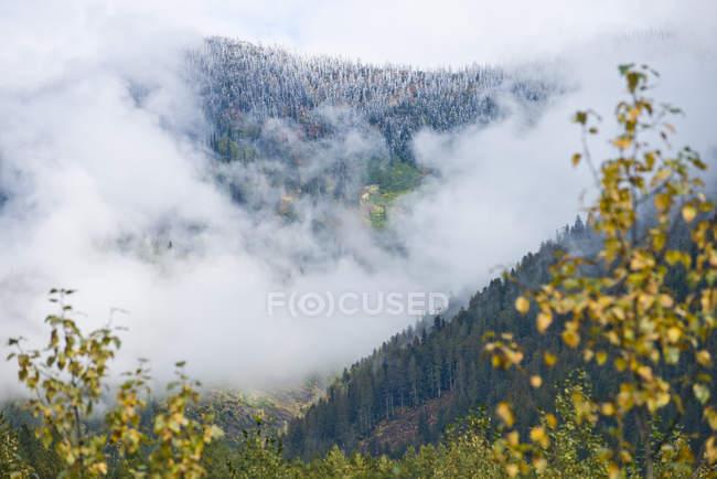 Сніговий покрив Вершина гори Revelstoke, Британська Колумбія, Канада — стокове фото