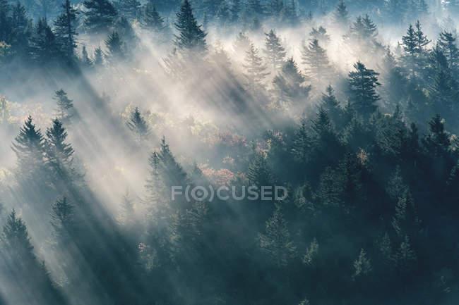Luce solare attraverso gli alberi sempreverdi in grandi montagne fumose vicino Bear Ridge Gap, Blue Ridge Parkway — Foto stock