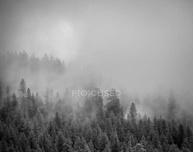 Scenic view of mist and trees in forest — Stock Photo