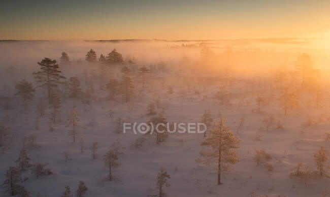 Scenic view of snowy field with trees in early morning — Stock Photo