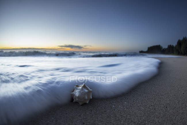Close up shot of a foam wave surrounding a sea shell on the shoreline in Hawaii during sunset — Stock Photo