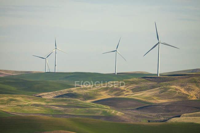 Éoliennes dans le champ d'herbe sur la journée ensoleillée — Photo de stock