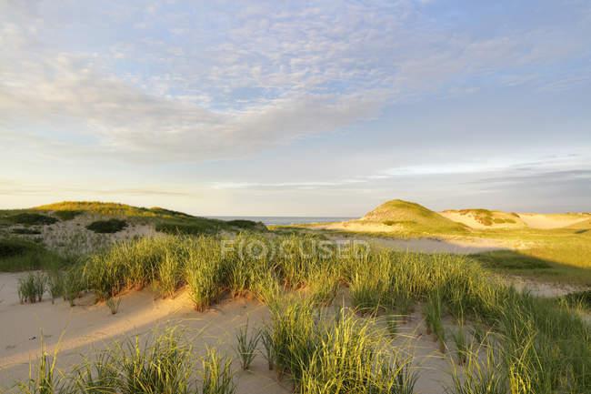 Гарним природним пейзажем з трава росте на піщаних дюн на пляжі Cape Cod Національний Приморський, штат Массачусетс, США — стокове фото