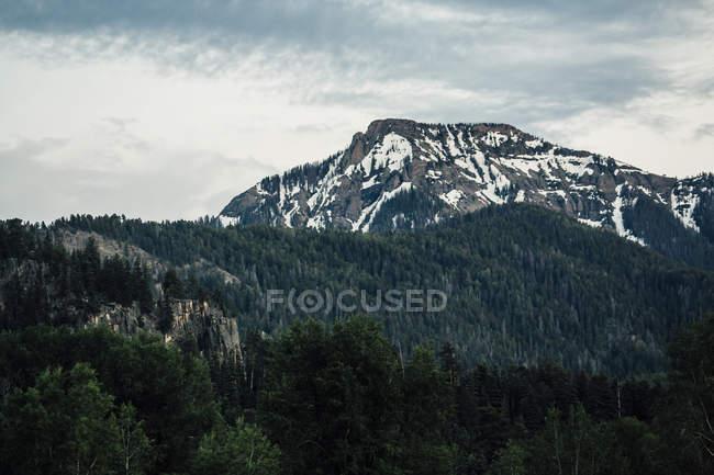 Nuages sur le vert de la forêt et le sommet de Flattop Mountain, Colorado, États-Unis — Photo de stock