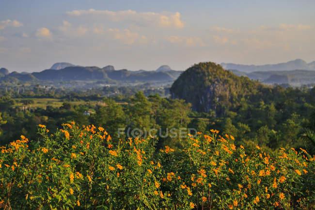 Viales région fam vallée et calcaire affleurements, Cuba — Photo de stock