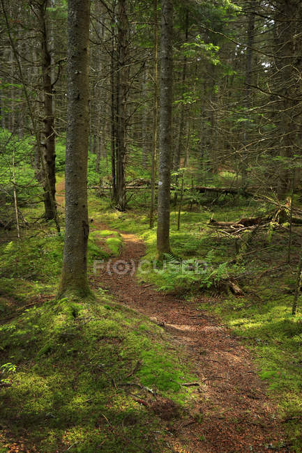 Moosigen Wald von Saint Regis Kanu Grünfläche, New York, Usa — Stockfoto