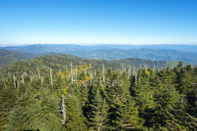 Aux États-Unis, en Caroline du Nord, Parc National de Great Smoky Mountains, Clingmans Dome, frontière entre la Caroline du Nord et Tennessee — Photo de stock