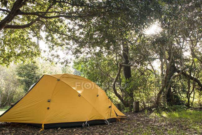 Tente au camping au parc de l'État Mckerricher, Humboldt County, Californie, Etats-Unis — Photo de stock