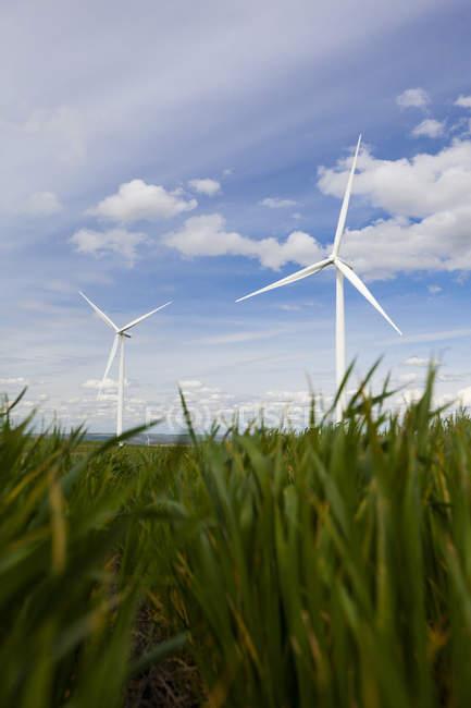 Éoliennes en terrain avec gazon contre bleu ciel nuageux — Photo de stock