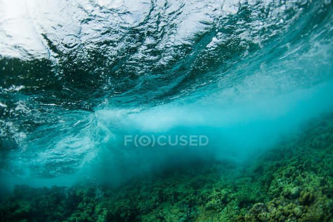 Підводний подання з хвилею порушення над Карибського басейну риф, Атлантичний океан, Беліз — стокове фото